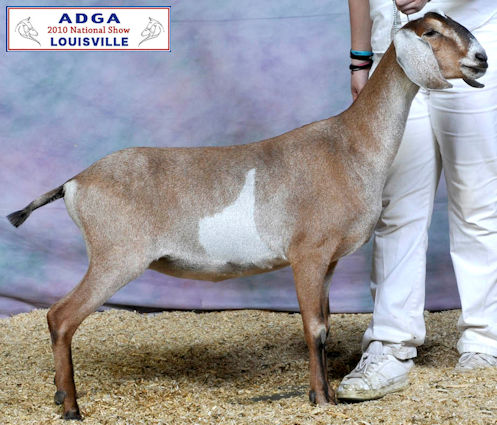 Herd Name/ADGA Question | Dairy Goat Info - Your Online ...
